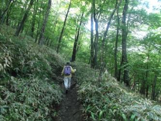 緑の木々の下をゆっくり歩く