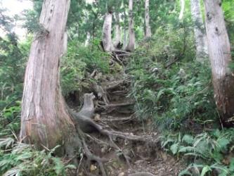 立山杉の急登