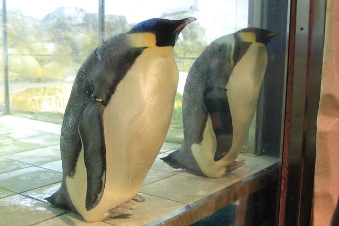20180429ペンギン