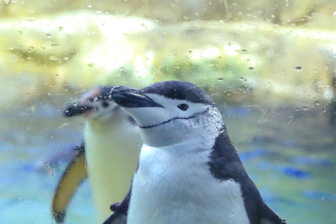 20180429ペンギン2