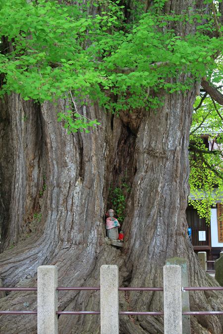 20180502お寺の木のお地蔵さん