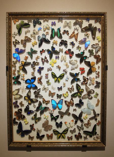 20180502蝶の額