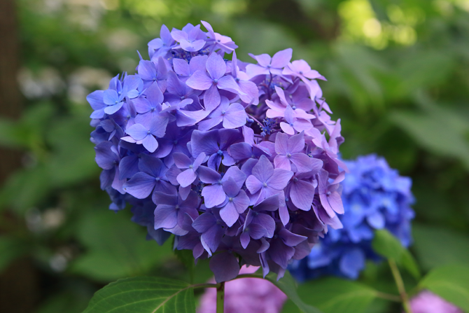 20180610紫のグラデ