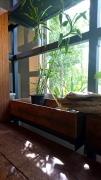 宇城市三角町戸馳島にある花のがっこう内の食卓mano(マーノ)でランチ♪