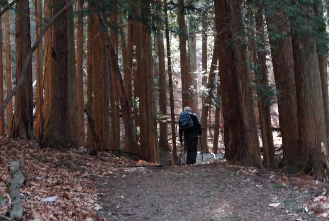 6495 林間を行く 640×430