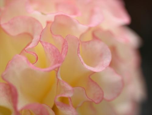 花びらがかわいい