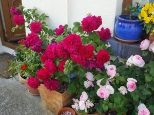 roseshome06184