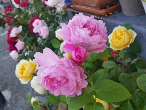 roseshome06183
