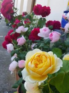 roseshome06185