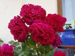 roseshome0618