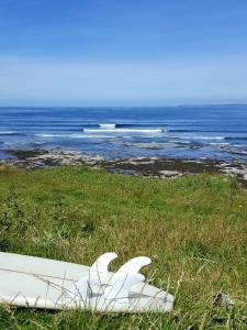 Lisrarysurfing0618
