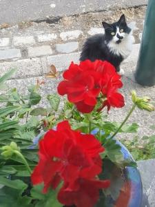 neighbourscat0718