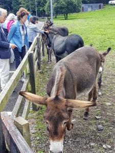 donkeyshokotour0718