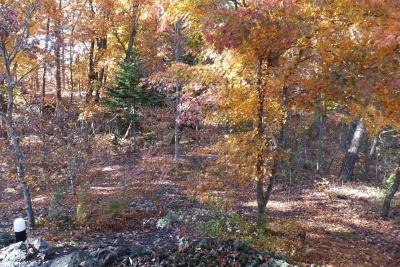 写真18-11-12 2