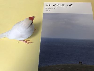 hashikkoni201805.jpg