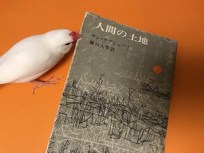 ningennotochi201807.jpg