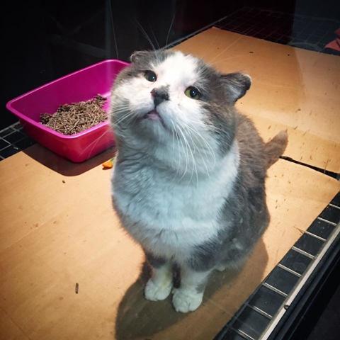 Barneythealleycat2