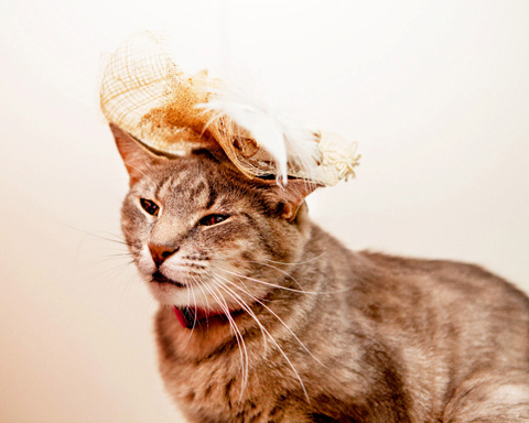 holly-royal-wedding-cats-in-fascinators-zoom