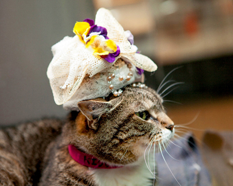 kiddle-royal-wedding-cats-in-fascinators-zoom