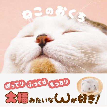 nekonookuchi_main