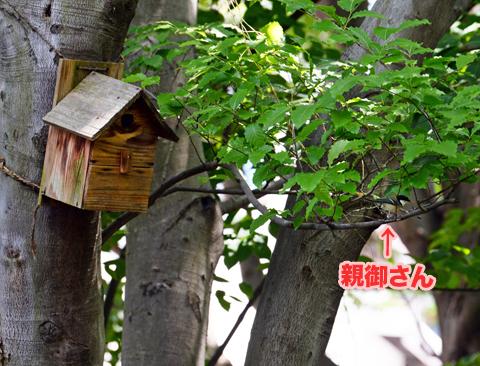shijukara2_050418