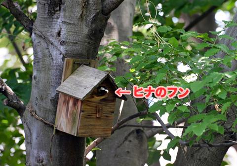 shijukara3_050418