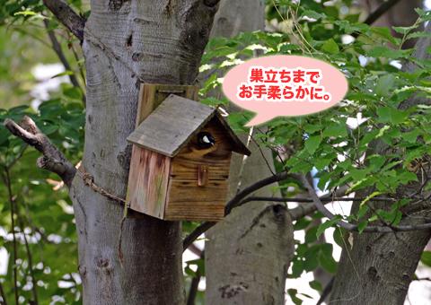 shijukara4_050418