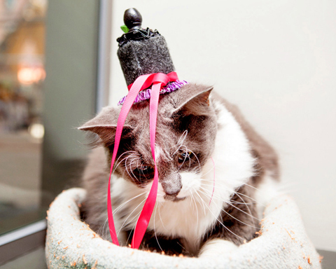 yetti-pinky-royal-wedding-cats-in-fascinators-zoom