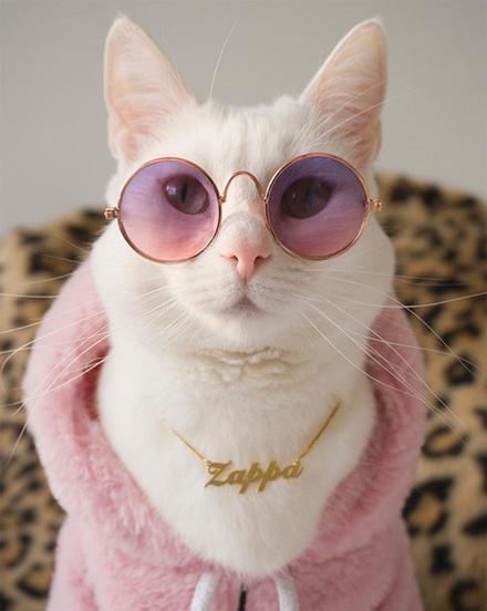 zappa_the_cat