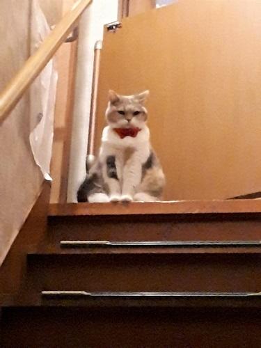 みーこ階段