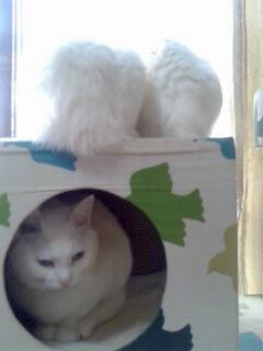 白猫タワー1