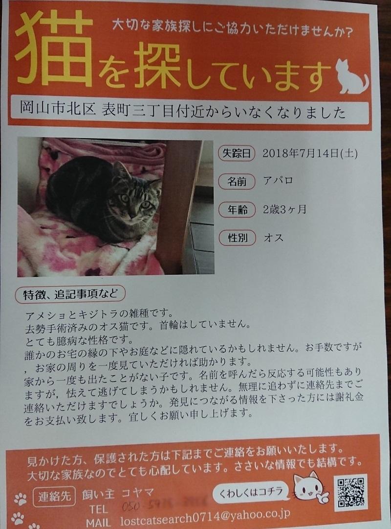 迷い猫 20180714