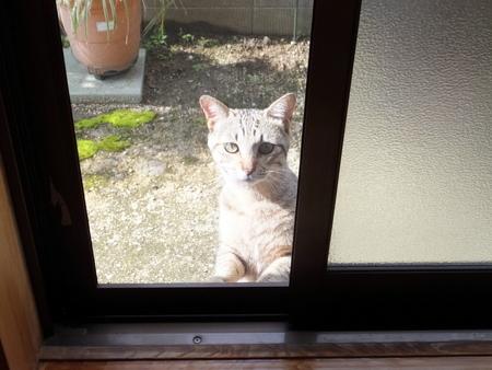 外猫が来た1