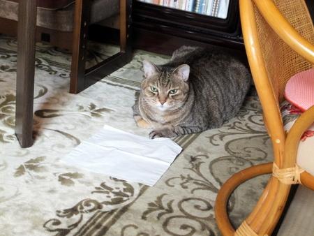 外猫が来た2
