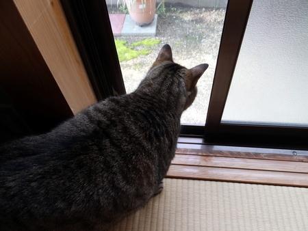 外猫が来た3