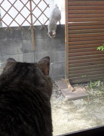 外猫が来た5