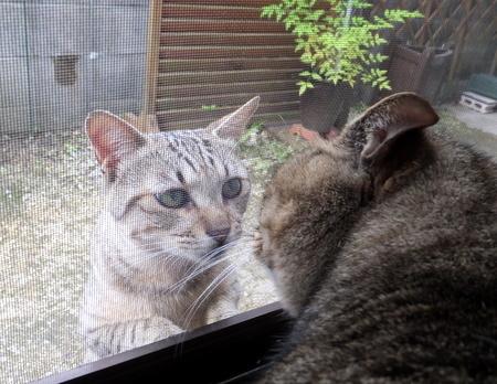 外猫が来た8