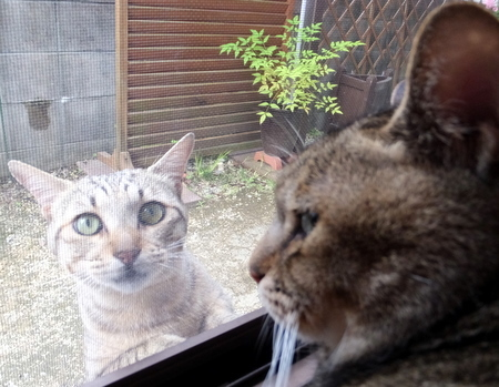 外猫が来た10