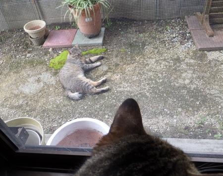 外猫が来た11