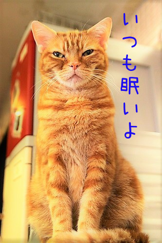 豆太郎20180612-02
