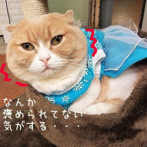 小町20180614-03
