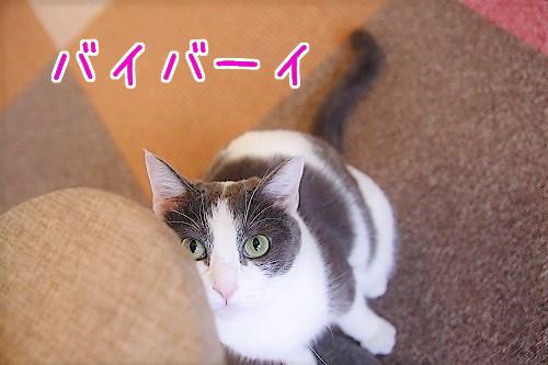 キキちゃん20180731-02