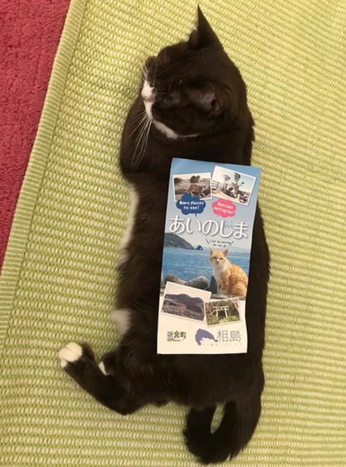 世界的に有名な猫の島へ行ってみようとした・・・結果報告!