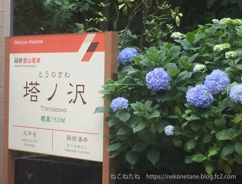 箱根登山鉄道とあじさい写真