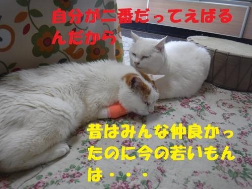 DSCF0429_convert_20180506135901.jpg