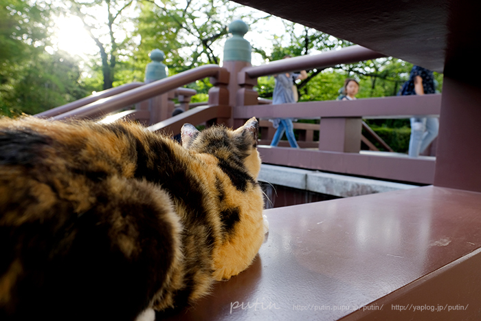 nekoyuhi_putin_owner1873762.jpg