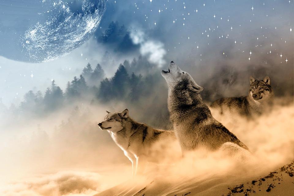 wolves-1400819_960_720.jpg