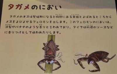 kawasemi07.jpg