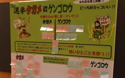 kawasemi09.jpg
