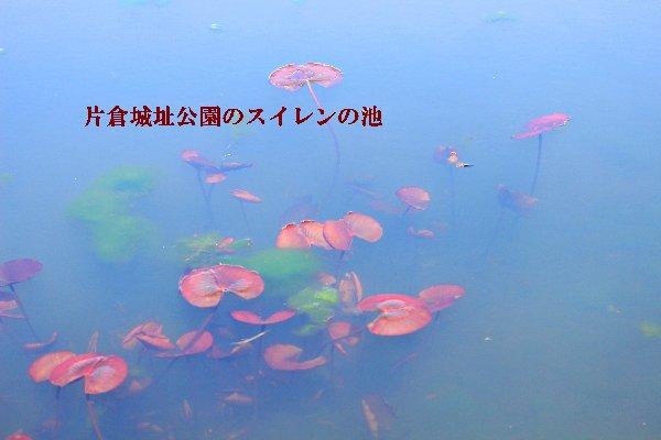 IMG_7426-29.jpg